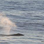 #whale #depoebay #oregon #drivebytourists #gertietherv #majercin #clemenete